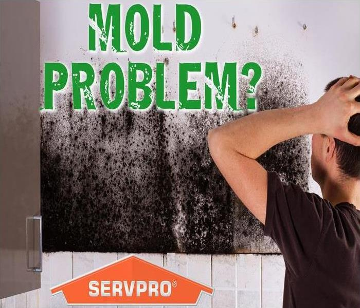 Mold Remediation Mold Removal???