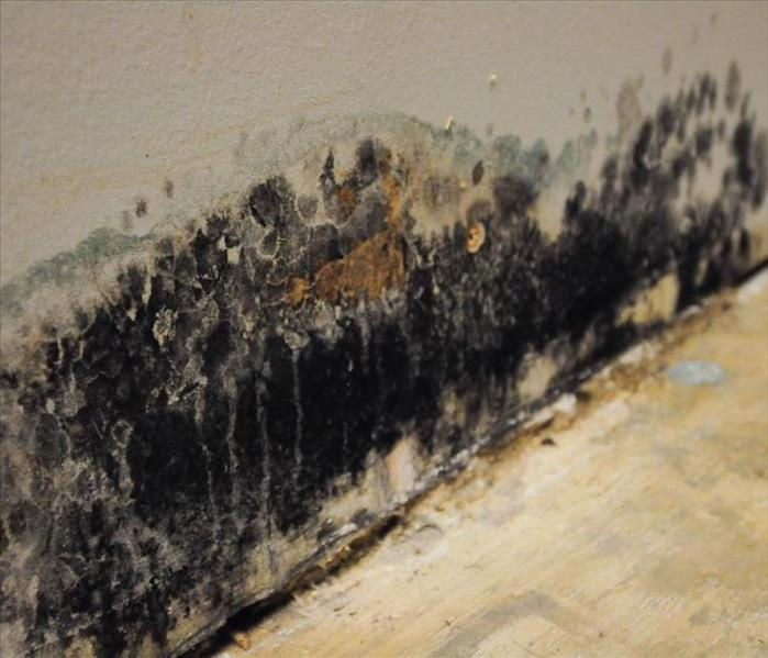 Mold Remediation What to do when you see mold.
