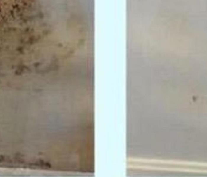 Mold Remediation What the difference between Mildew and Mold?