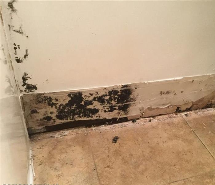 Mold Remediation Can We Mitigate It? Yes We Can!